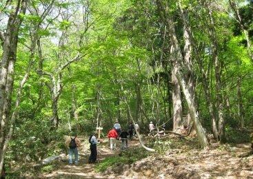新庄村 森林セラピー体験